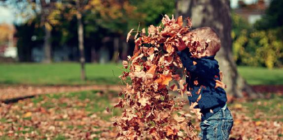 disiclin-otoño-manchas