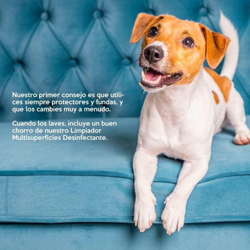 hogares-con-mascota-y-limpieza-movil1